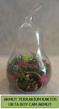 Cam Armut terrarium 5 kaktüs  İstanbul Üsküdar çiçek gönderme